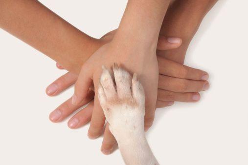 parceria com animal